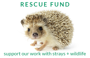 Support our Rescue Fund
